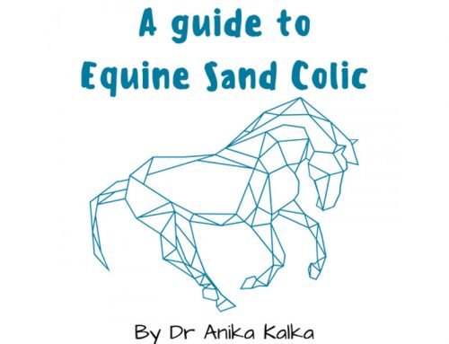 Equine Sand Colic with Dr Anika Kalka