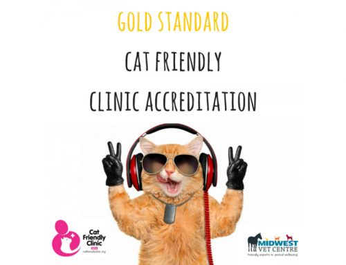 We're officially a Gold Standard Cat Friendly Clinic!