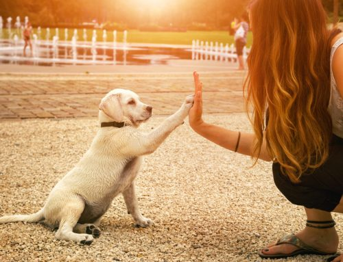 How the Pay It Paw-ward Loyalty Rewards Club Benefits Your Pet