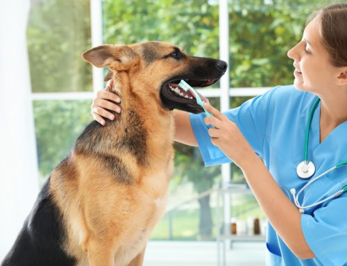 Whole-Body Health: The Importance of Dental Cleanings for Your Pet