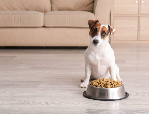 Food for Thought: What are Your Pet's Nutritional Needs?