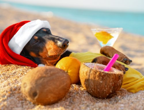 Top 5 Tips for a Cool Christmas for Your Pets