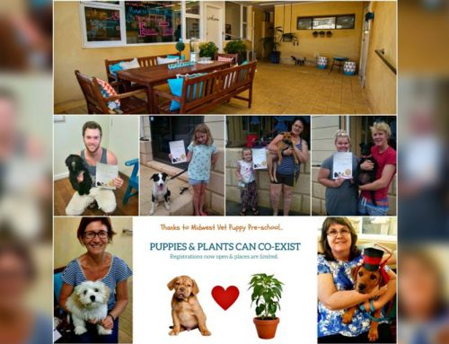Come. Sit. Stay. Play at Midwest Vet's Puppy Preschool!