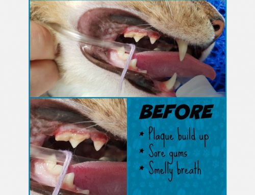 Brush up on your Dental know-how